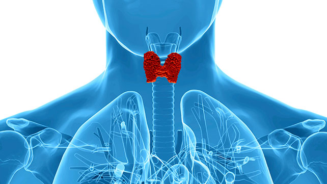 WHAT IS THE THYROID?
