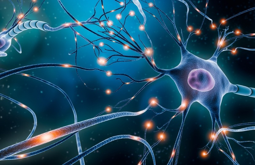 NEUROTRANSMITTERS AND WHY THEY MATTER